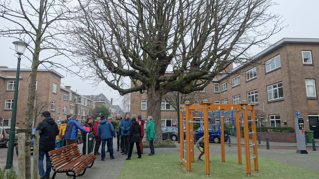De oudste boom in de Morelstraat.